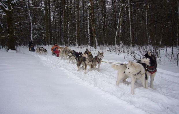 schlittenhundefahrt-twistringen-outdoor