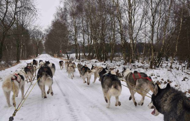 schlittenhundefahrt-twistringen-passion