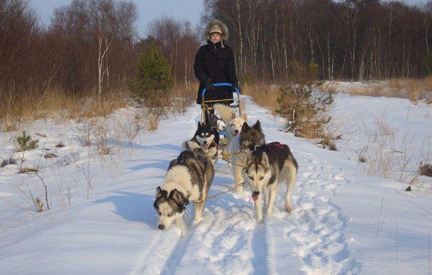 schlittenhundefahrt-twistringen-sport