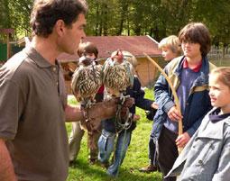 6-greifvogelhorst-pfarrwerfen