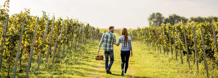 Weinreisen