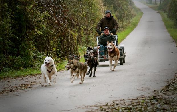 schlittenhunde-workshop-schwabmuenchen-hunde