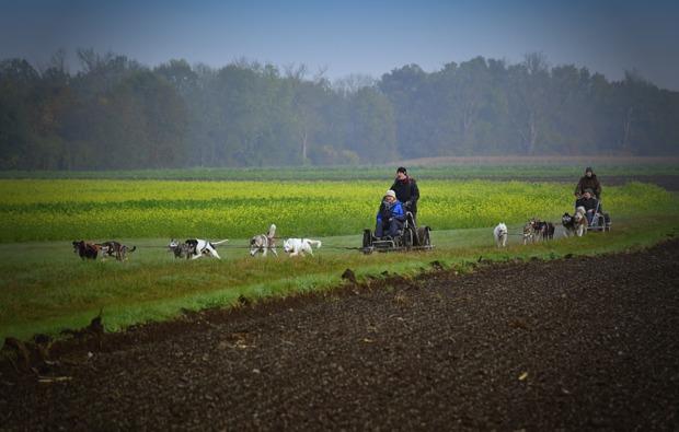 schlittenhunde-workshop-schwabmuenchen-schlitten-kurs
