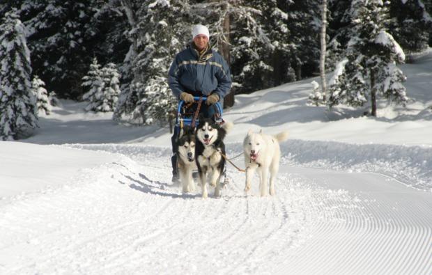 schlittenhunde-workshop-schwabmuenchen-steueren
