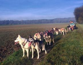 Exklusiver Schlittenhunde-Kurs 2-3 Stunden
