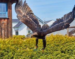 Falkner-Erlebnis Villmar-Weyer Beizjagd Beizjagd - 1 Tag