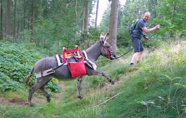 eseltrekking-clausthal-zellerfeld-bergauf