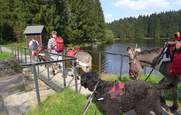 eseltrekking-clausthal-zellerfeld-bruecke