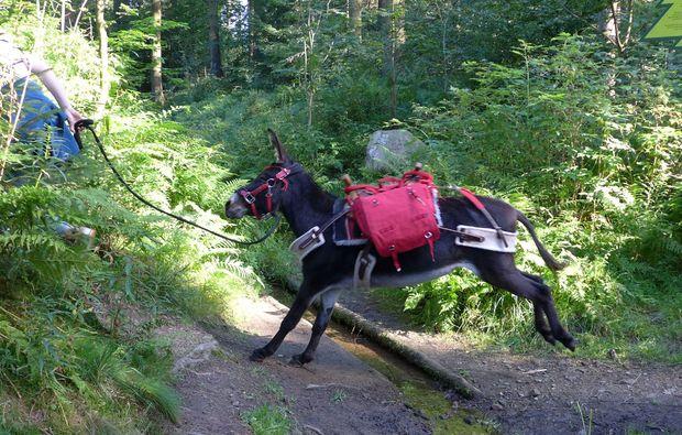 eseltrekking-clausthal-zellerfeld-hindernis