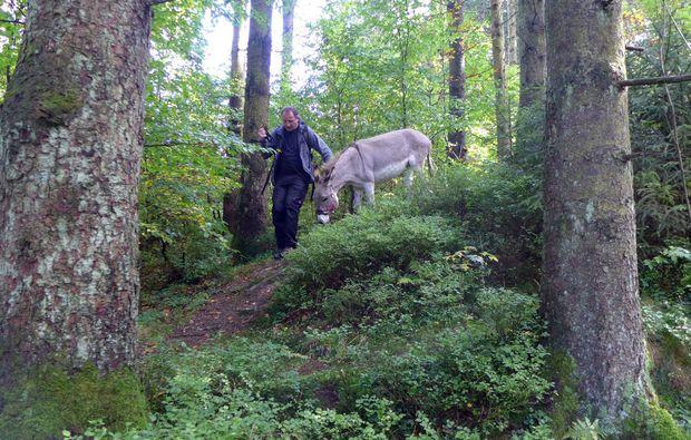 eseltrekking-clausthal-zellerfeld-natur