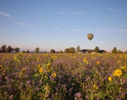 Ballonfahren - Pregarten 1,5 Stunden