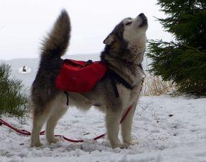 Wandertour-Trapper Tour mit Packhund mit Packhund durch UNESCO-Weltkulturerbe - ca. 3 Stunden