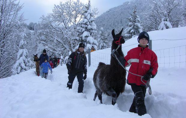 lamatrekking-winter-berchtesgaden