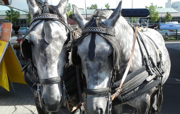 kutschfahrt-berlin-pferde