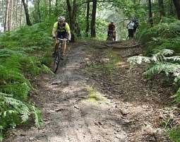 Mountainbike Grundkurs Winterberg Waldgebiet Bikearena Hochsauerland - Grundkurs - 5 Stunden
