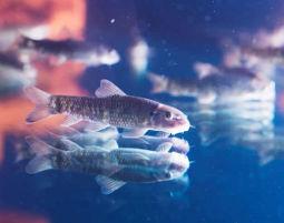 knabberfische_header