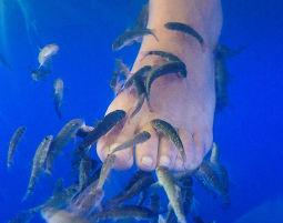 Pediküre für Zwei (Fisch-Pediküre) für Zwei