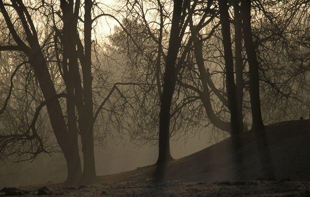 fototour-duelmen-trees