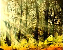 Sonnenwald-bob-ross-deggend
