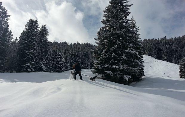 husky-trekking-nueziders-ausblick