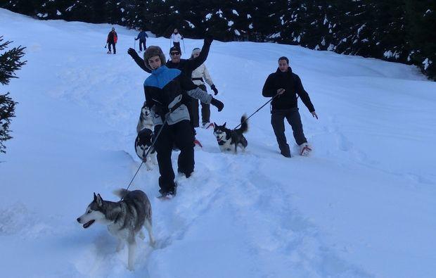 husky-trekking-nueziders-spazieren