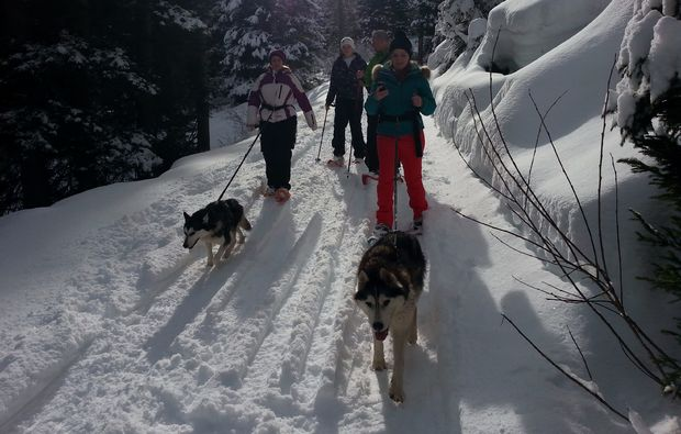husky-trekking-nueziders-tour