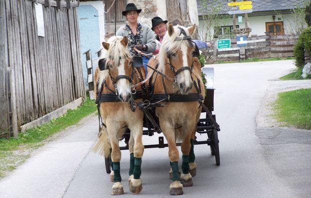 pferdeschlittenfahrt-wildalpen-fahrt