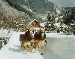 Pferdeschlittenfahrt Wildalpen