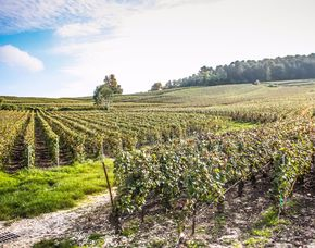 Weinbergwanderung mit Weinprobe & Mittagessen