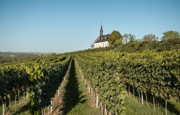 weinbergwanderung-lorch-bg5