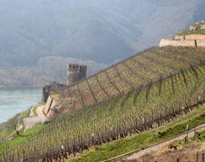 Weinwalking Rheingau - Binger Loch mit Verkostung & Picknick