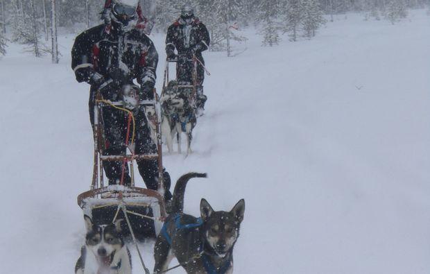 schlittenhundefahrt-saerna-winter