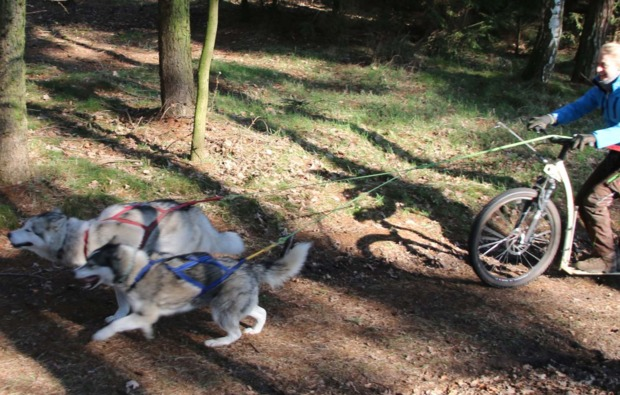 dogscooter-twistringen-action