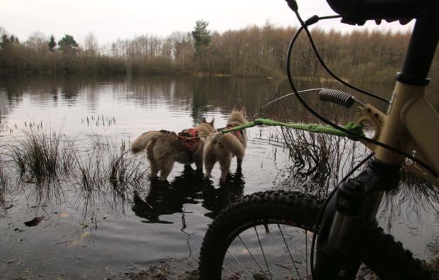 dogscooter-twistringen-freizeitspass