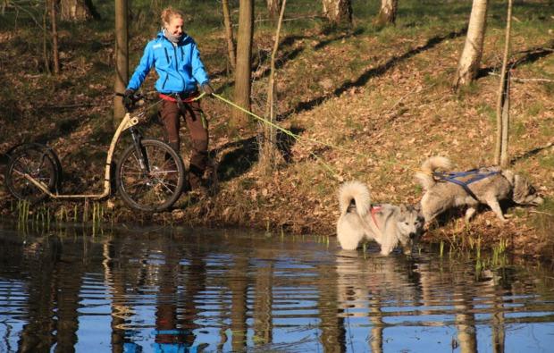 dogscooter-twistringen-outdoor