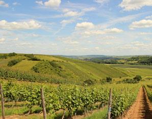 Weinbergsrundfahrt im Holder mit Verkostung, Weinguts- & Kellerführung