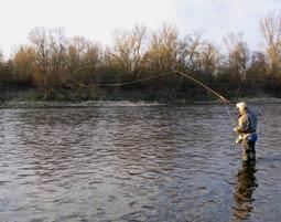 c-fliegenfischen
