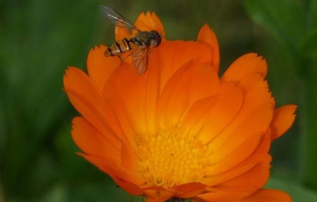 kraeuterwanderung-reit-im-winkl-natur