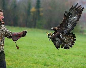 Falkner für einen Tag Wunsiedel