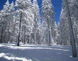 Schneeschuh-Wanderung-2