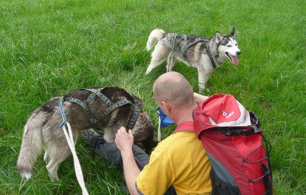 husky-trekking-moedingen-outdoor