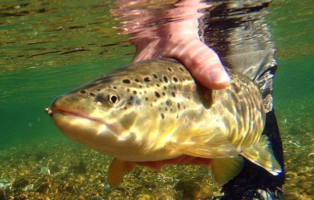 fliegenfischen-bad-toelz-tier