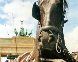 Bild Kutschen & Pferdeschlittenfahrt - Romantische Kutschfahrten genießen