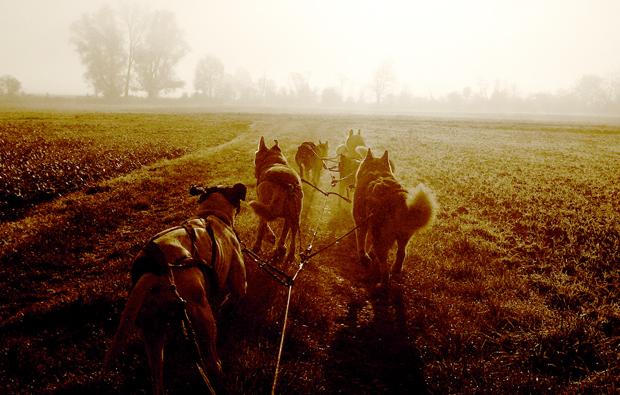 husky-nachtfahrt-schwabmuenchen-sonnenuntergang