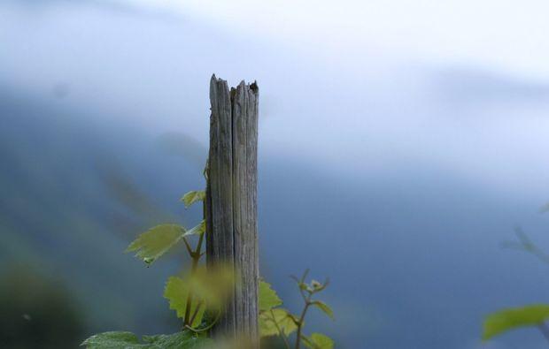 kurzurlaub-enkirch-pflanze