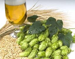 Braukurs mit Bierkochkurs - Flein mit Verkostung, Kochkurs mit 3-Gänge-Menü & Brauereibesichtigung