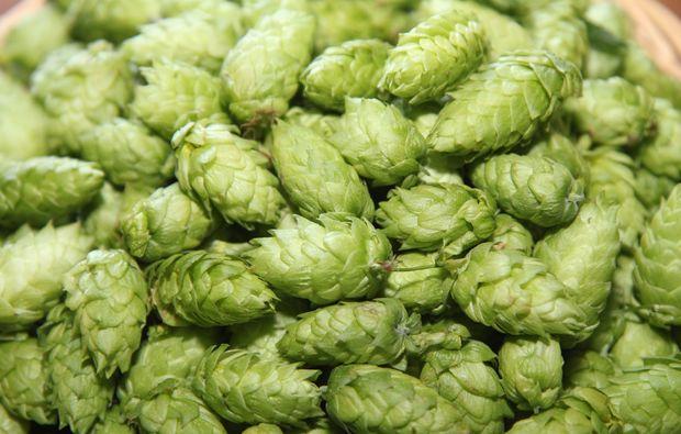 braukurs-vils-bier-herstellen
