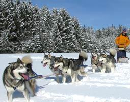 Schlittenhunde-Schnupperkurs Ca. 3,5 Stunden
