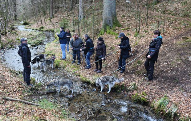 husky-trekking-schmallenberg-action