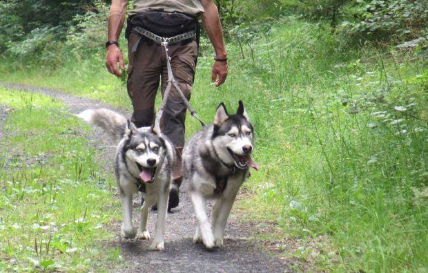 husky-trekking-schmallenberg-fun